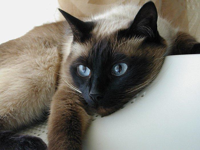 У каждой кошки периоды судорожной активности протекают по-своему