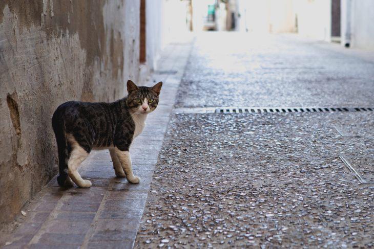У кастрированных котов оказывается намного меньше поводов наведываться на улицу