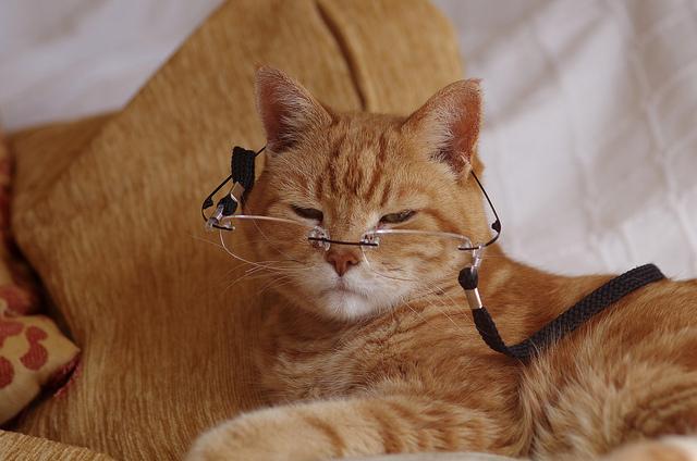 У пожилых котов могут обнаружится проблемы с суставами и прочие недуги, мешающие активному движению