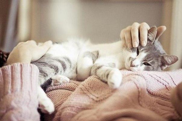 Хозяин может значительно облегчить протекание эпилептического приступа для кошки