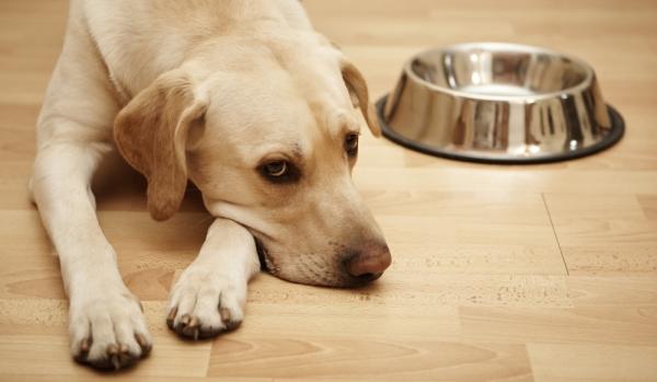 Чтобы окончательно очистить организм после интоксикации, собаке необходимо соблюдать голодную диету