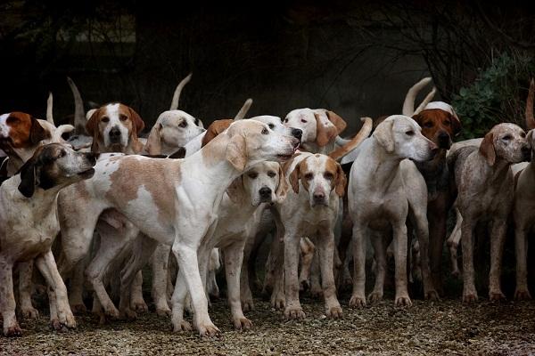 Ветеринары еще не установили однозначной связи между определенными породами и их склонностью к развитию диабета