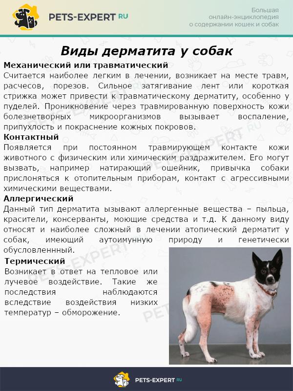 Виды дерматита у собак