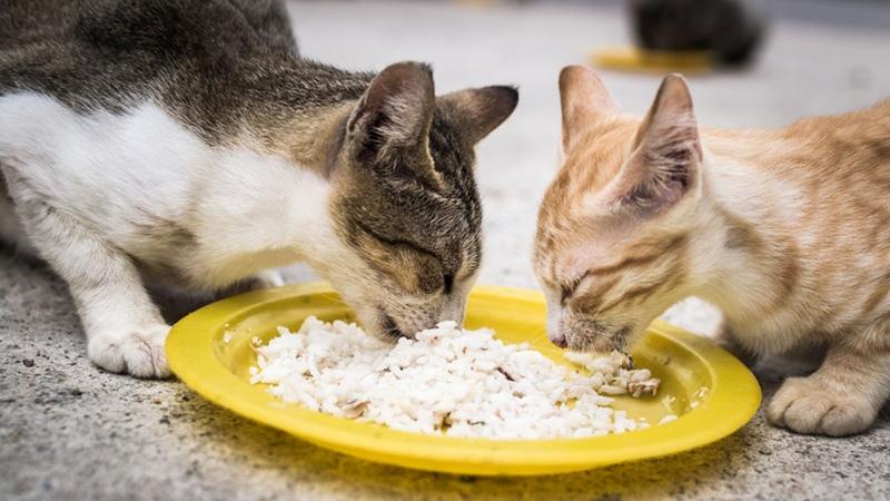 В каши можно добавлять более насыщенные ингредиенты, чтобы привлекать внимание кошки