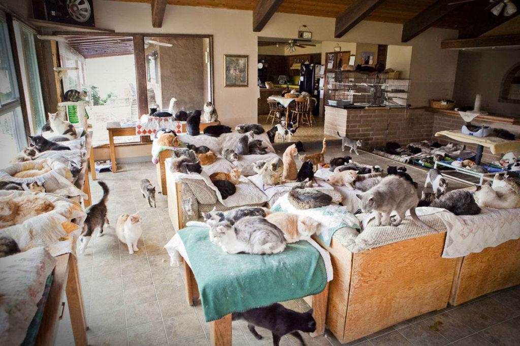 В местах скопления кошек коронавирус представляет наибольшую опасность
