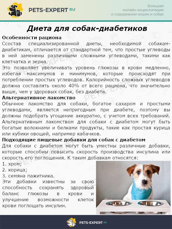 Диета для собак-диабетиков