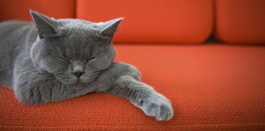 Домашние коты наименее подвержены коронавирусу