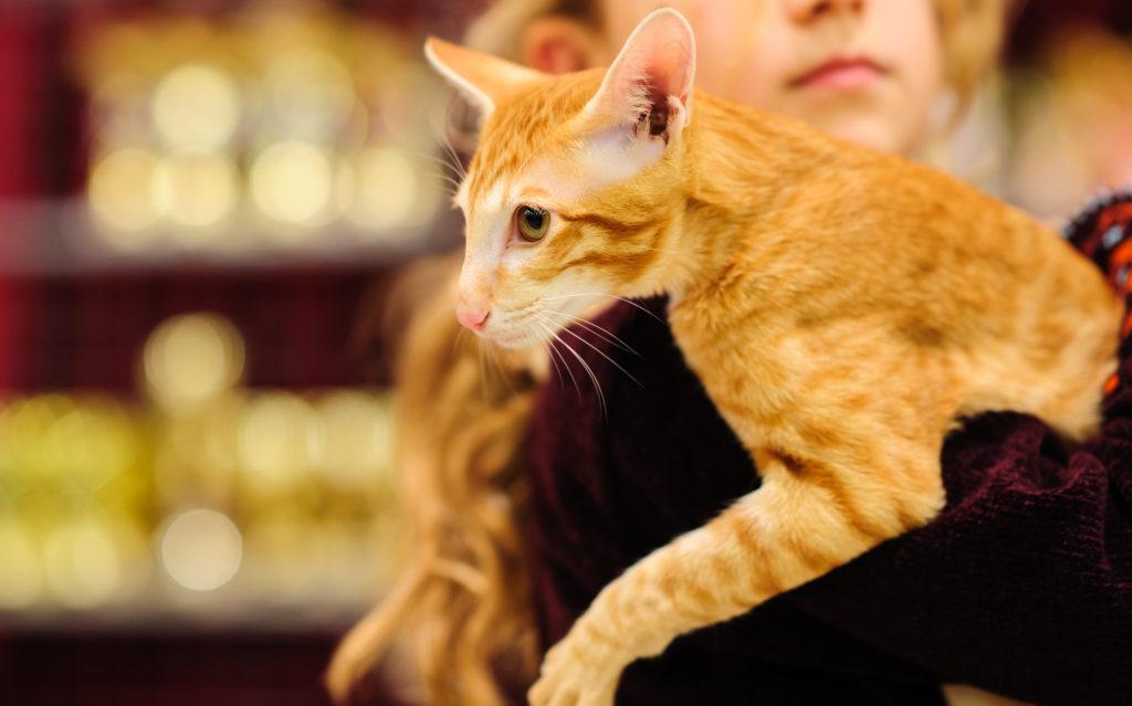 Животное, инфицированное коронавирусом не представляет опасности для человека