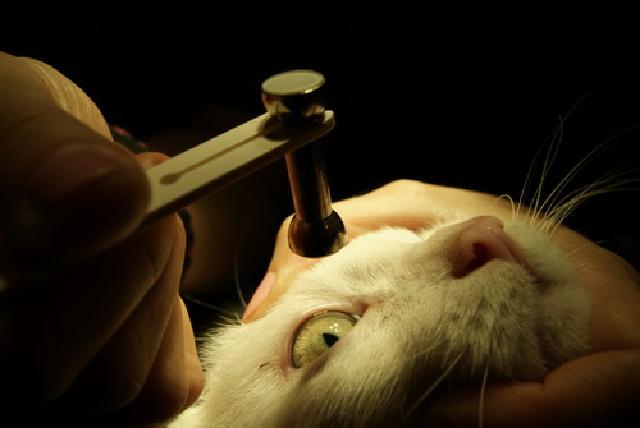 Измерение внутриглазного давления у кошек