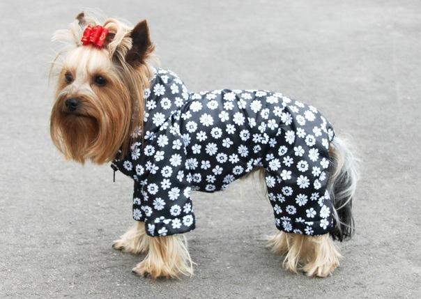 К сожалению, не все комбинезоны для собак шьются из качественых дышащих материалов