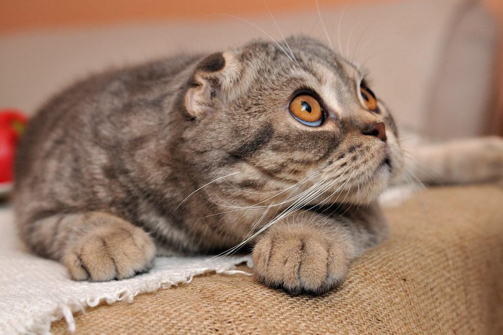 Несмотря на то, что коронавирус не угрожает домашним котам, заниматься их иммунитетом все равно необходимо