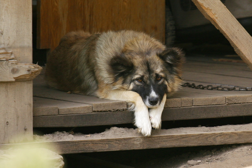 Не нашедшие общего языка с сородичами собаки могут впасть в депрессию и нуждаются в поддержке