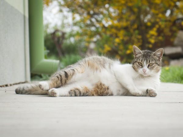 По мере приближения родов кошка теряет интерес к пище