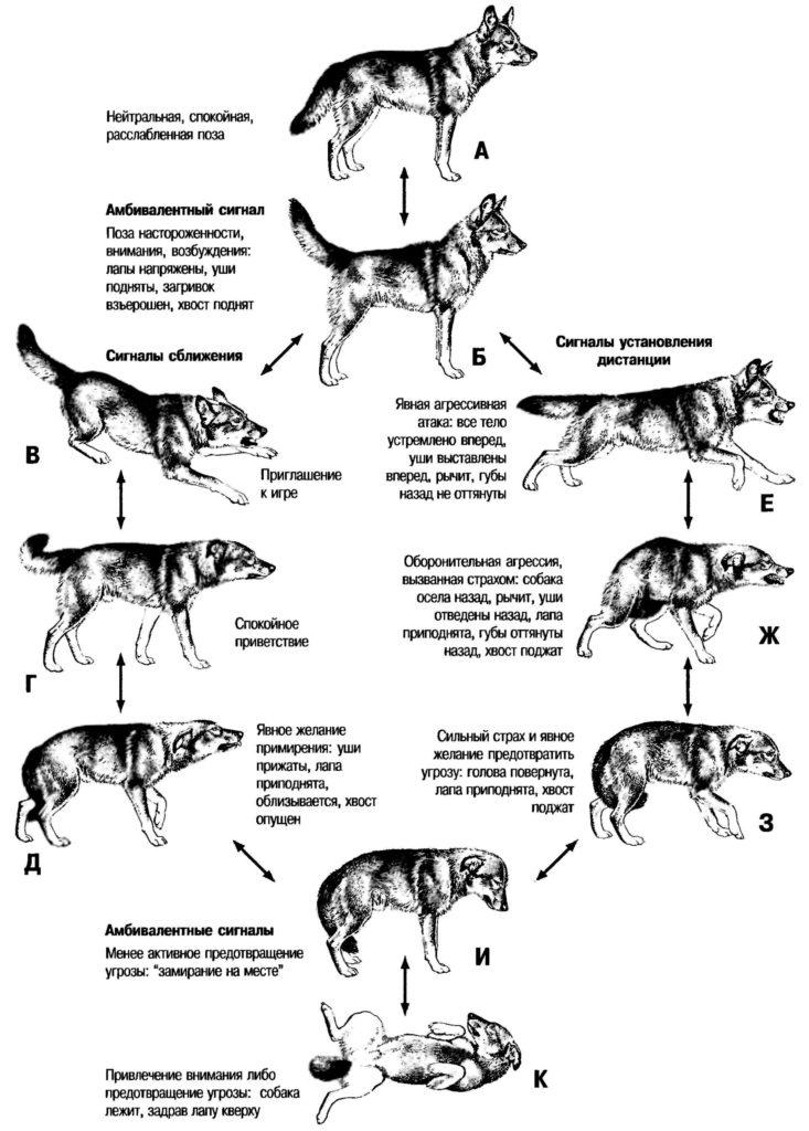Разные настроения собак и типы их внешний проявлений