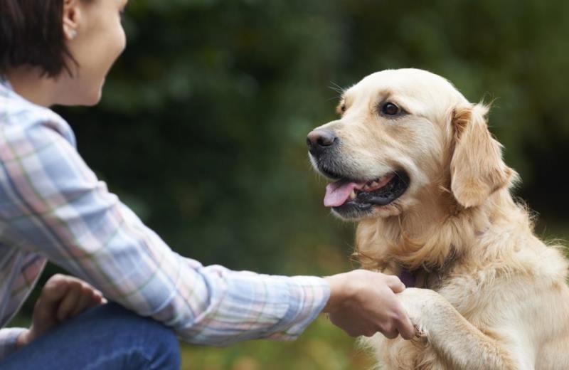 Странное поведение собаки может быть проявлением скуки или желания быть замеченной хозяином