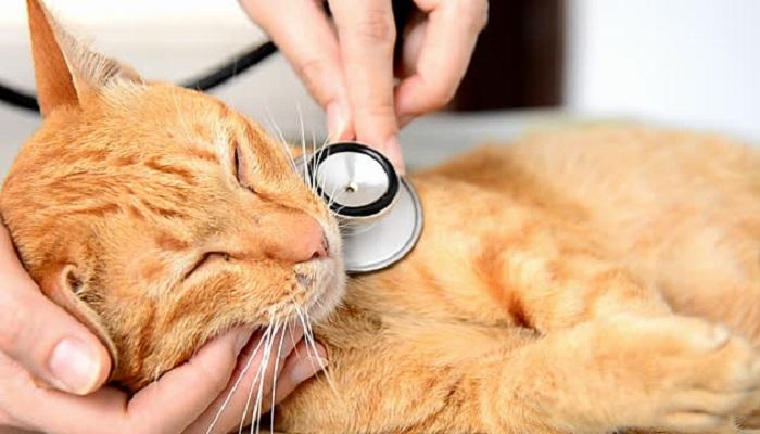 У животных, обладающих крепким здоровьем, коронавирус развивается реже, чем у ослабленных сородичей