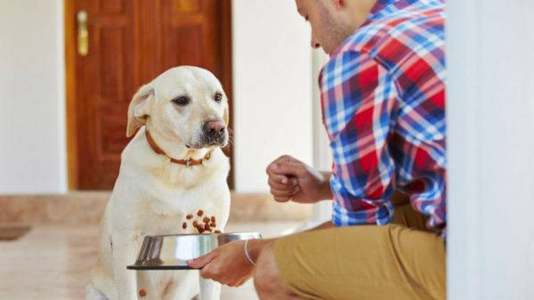 Целью диеты является контроль веса собаки